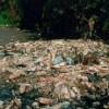 Rios e canais são destino de quase metade do lixo da Baixada Fluminense, mostra pesquisa