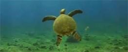 Lixo estrangeiro ameaça tartarugas na Paraíba