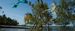 Brasileiros querem proibição das sacolas plásticas, revela pesquisa