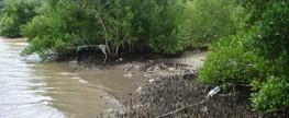 Resíduos sólidos nos manguezais: um problema ignorado
