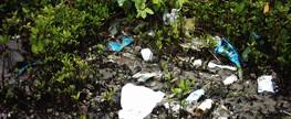 """""""Clean-upers"""", e os manguezais?"""