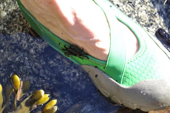 Este pequeno caranguejo estava procurando um almoço apetitoso ao limpar os pés de Valerie.