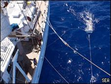 As redes de coleta foram mantidas parte dentro e parte fora da água.