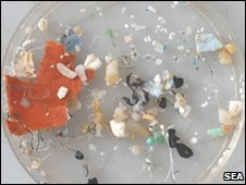"""We know that many marine organisms are consuming these plastics and we know this has a bad effect on seabirds in particular"". Dr Karen Lavender Law, Sea Education Association"