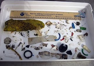 Assorted other debris that came up in trawl samples that day (does not include the NOAA ruler!).