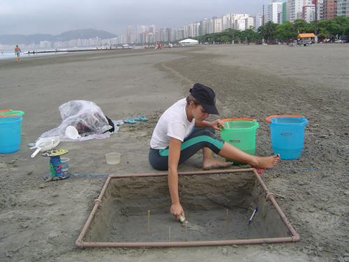 Procedimentos de coleta para avaliar a distribuição de pellets por profundidade numa praia da Enseada de Santos (área de 1m² e 30cm de profundidade). © Priscilla Bosa  / IO-USP