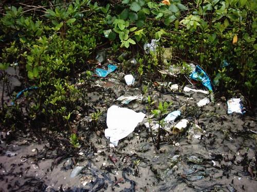 Resíduos acumulados em área de manguezal na região de Santos e São Vicente. © Cesar Cordeiro