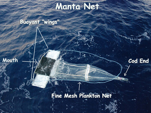 "Diagram of a manta net. Seawater enters the mouth and is filtered through a fine, mesh plankton net. Each tow is 15 minutes long, and filters a surface area equivalent to an Olympic-sized swimming pool, concentrating debris and critters at the ""cod end"" of the net. Image courtesy of NOAA Okeanos Explorer Program."