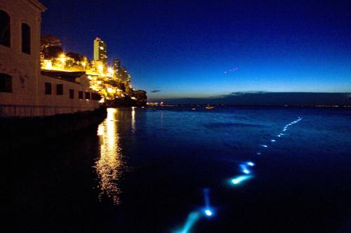 Luzes de 'Tempo de Fundo', última exposição de Lica Moniz, realizada no ano passado, no MAM-BA, que chamou atenção para a relação homem x ambiente marinho. Crédito: Valéria Simões.