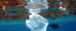 Lixo Marinho com enfoque em resíduos plásticos