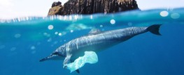 Global plastics industry launches action plan for solutions on marine litter