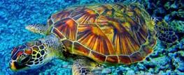 Plástico amigo também mata tartaruga